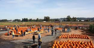 Pumpkin Patch Issaquah by Pumpkin Patch Carpinito Brothers