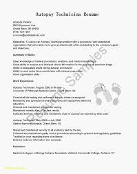 Simple Resume Template Minimalist Executive New Examples Good