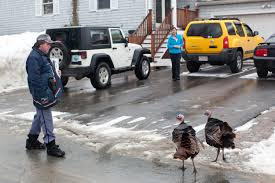 Marblehead Mailman Cornered By Wild Turkeys | Nate Photography Listen Nj Pomaster Calls 911 As Wild Turkeys Attack Ilmans Ilman With Package Icon Image Stock Vector Jemastock 163955518 Marblehead Cornered By Nate Photography Mailman Delivers 2 Youtube Ride Along A In Usps Truck No Ac 100 Degree 1970s Smiling Ilman In Us Mail Truck Delivering To Home Follow The Food Truck One Students Vision For Healthcare On Wheels Postal Delivers Letters Mail Route Video Footage This Called At A 94yearolds Home But When He Got No 1 Ornament Christmas And 50 Similar Items Delivering Mail To Rural Home Mailbox Photo Truckmail Clerkilwomanpostal Service Free Photo