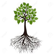 Tree With Roots Vector Transparent Background Silhouette At Getdrawings Com Free For Personal Use Rh