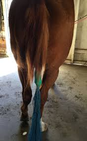 Horse Hair Shedding Blade by 232 Best Horse Grooming Images On Pinterest Horse Grooming