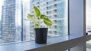le bureau verte mettre des plantes vertes dans bureau le paysagiste