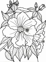 Tropical Flower Coloring Pages To Print