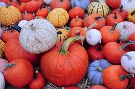 Sunnyside Pumpkin Patch by Local Favorites Teresa Baum