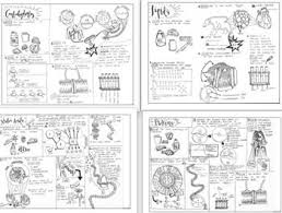 I Made This Bundle Of The Four Biomolecule Coloring Sheets There Is A Website That