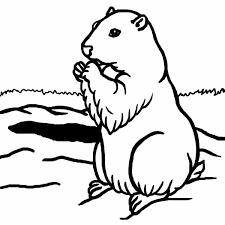 Dessin De Coloriage Marmotte à Imprimer CP17684