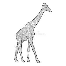 Download Giraffe Coloring Book For Adults Vector Stock
