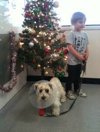 Christmas Tree Cataract Surgery by Bonnie Blind Prior To Cataract Surgery Meeting A Friend In