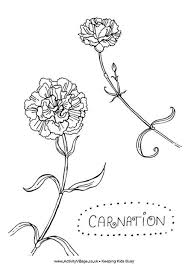 Carnation Colouring Page