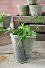 Rustic Cement Flower Pots 4 1 2 Inch