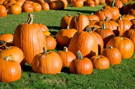 Pumpkin Patch Houston Oil Ranch by October 2014 Richdale Writes