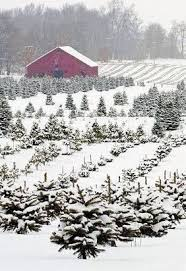 Christmas Tree Farm Near Lincoln Nh by 672 Best Christmas Images On Pinterest Retro Christmas