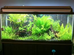 Extra Large Fish Tank Decorations by 90 Gallon Archives Myaquarium