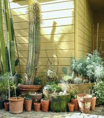 Backyard Cactus - Cactus Jungle My Backyard Garden Nation Of Islam Ministry Agriculture Super Groovy Delicious Bite Big Lizard In My Back Yard Erosion Under Soil Backyard Ask An Expert I Think Found Magic Mushrooms Wot Do This Video Is Hella Clickbait Youtube Dinosaur Storyboard By 100142802 Holes In The Best Home Design Ideas Cottage Months Ive Been Creating More Garden Rooms Cat Frances Aggarwal Backyards Terrific Rocks And Minerals Tree Growing Started Fruiting Can Someone Id