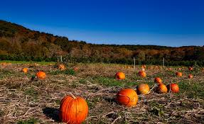 Pumpkin Picking Ct Best by Free Photo Pumpkin Patch Autumn Fall Free Image On Pixabay