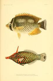 Bulletin Of The Bureau Fisheries Vol 25 1905