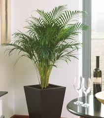 arndt grün erleben zimmerpflanzen für ein gutes raumklima