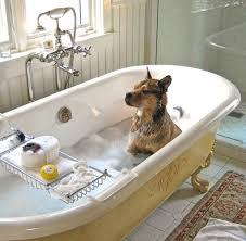 hund im hotel bitte einmal fell schonieren und massieren