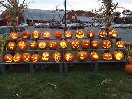 Pumpkin Picking Ct Best by Find Pick Your Own Pumpkin Patches In New Jersey Corn Mazes And
