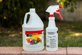 Antifungal Spray For Carpet by 3 Natural Ways To Remove Mold From Car Seats And Interior Wheels