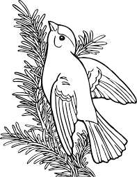 Coloring Book Willow Goldfinch