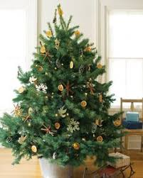 Potted Christmas Tree by Potted Spruce Christmas Tree 3ft The White Company Uk 12