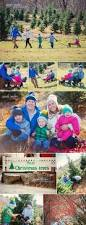 Christmas Tree Farm For Sale Boone Nc by 35 Best 2014 Holiday Mini Sessions Images On Pinterest Christmas