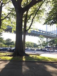 Christmas Tree Disposal Nyc 2015 by Projects U2014 Astoria Park Alliance