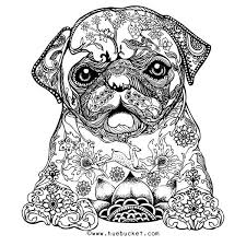 Cute Pug For Adults