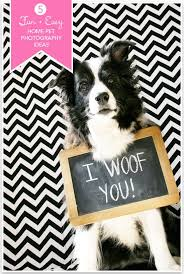 best 25 pet photos ideas on pinterest dog photos pet