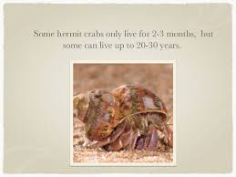 Do Hermit Crabs Shed Their Body by Hermit Crabs