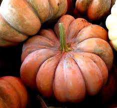Cinderella Pumpkin Seeds Australia by Aromatic Muscade De Provence Pumpkin Heirloom Seeds Organic