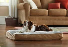 best orthopedic dog bed choose the best for your pet