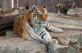 Coupon Henry Doorly Zoo / Squaretrade Coupon Code August 2018 Squaretrade Laptop Protection Plans Nume Coupons Codes Squaretrade Coupon Code August 2018 Tech Support Apple Cyber Monday 2019 Here Are The Best Airpods Swuare Trade Great Predictors Of The Future Samsung Note 10 874 101749 Unlocked With Square Review Payments Pos Reviews Squareup Printer Paper Buying Guide Office Depot Officemax Ymmv Ebay Sellers 50 Off Final Value Fees On Up To 5 Allnew Echo 3rd Generation Smart Speaker Alexa Red Edition Where Do Most People Accidentally Destroy Their Iphone Cnet