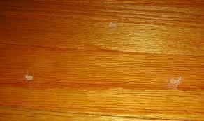 Squeaky Wood Floor Screws by Diy How Not To Fix A Squeaky Floor Rabit Stew