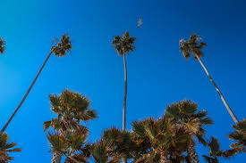 HD Wallpaper Palm Trees At Butterfly Beach In Santa Barbara CA