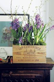 how to grow narcissi and hyacinth bulbs indoors flower ideas