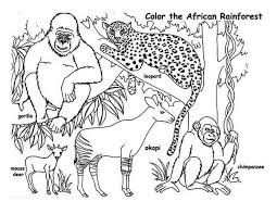 Rainforest African Animals Coloring Page PageFull Size Image