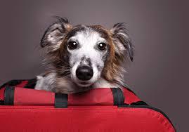 hunde in der kiste das problem mit der hundebox