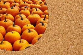 Atlanta Pumpkin Patch Corn Maze by Atlanta U0027s Best Pumpkin Patches