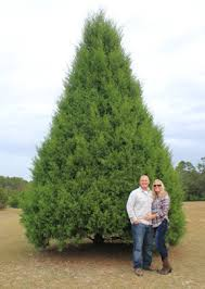 Cody And Linda Strickland Standing In Front Of A 22 Ft Southern Red Cedar