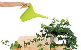 pflanzen im schlafzimmer 9 luftreiniger helfen beim schlafen