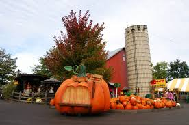 Where Did Pumpkin Patch Originate by Hours And Admission Rates Visit Our Affordable Pumpkin Patch