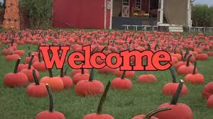 Gust Brothers Pumpkin Farm by Pumpkin Picking Long Island The Only Farm You U0027ll Enjoy The Long