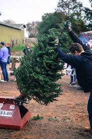 Elgin Christmas Tree Farm Pumpkin Festival by 52 Best Holiday Images On Pinterest Christmas Ideas Noel And