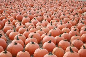 Pumpkin Picking Farm Long Island Ny by Pumpkin Picking 2017 On Long Island Momeefriendsli