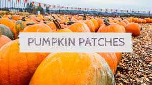 Pumpkin Farms Southern Illinois by Wisconsin Pumpkin Patches Hauntedwisconsin Com