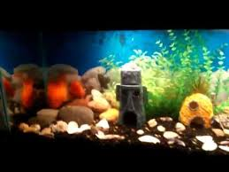 Spongebob Aquarium Decor Set by Spongebob Squarepants Bottom Aquarium Theme Youtube