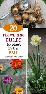 flowers lilies amazing flower bulbs bulbs bring the