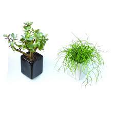 Best Bathroom Pot Plants by Bathroom Pot Plants Bathroom Trends 2017 2018